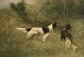 English Setters in a Field