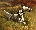 English Setter & Pointer in the Field