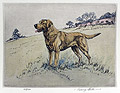 Yellow Labrador Retriever in a Landscape