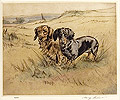 Smooth Haired & Long Haired Dachshunds
