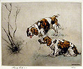 Welsh Springer Spaniels in a Landscape