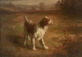 Brittany Spaniel in a Field