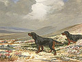 Gordon Setters in a Highland